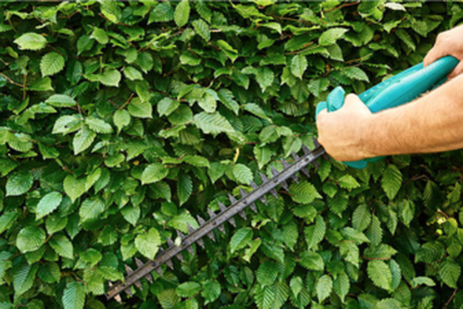 Tree Hedge Trimming